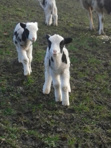 2 of triplets born 19 Jan 2014